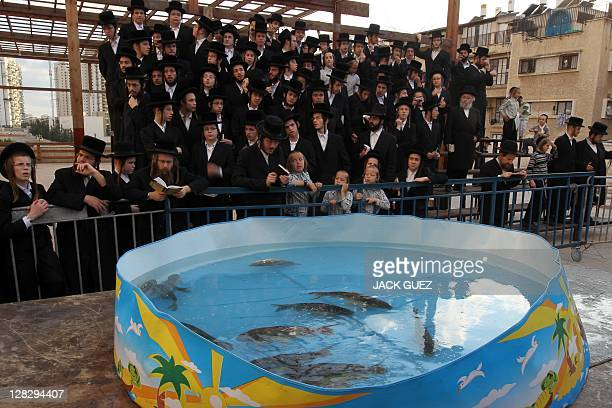 UltraOrthodox Jews pray near a plastic pool filled with water and live fishes in as they perform the Tashlich ritual in the Israeli city of Bnei Brak...