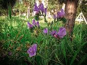 ultraviolet color trend nature