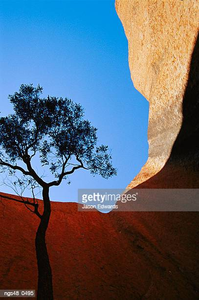 Uluru National Park, Northern Territory, Australia. Rock formations and silhouetted tree.