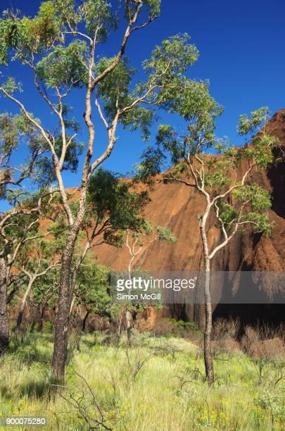 Uluru, Uluru-Kata Tjuta National Park, Northern Territory, Australia