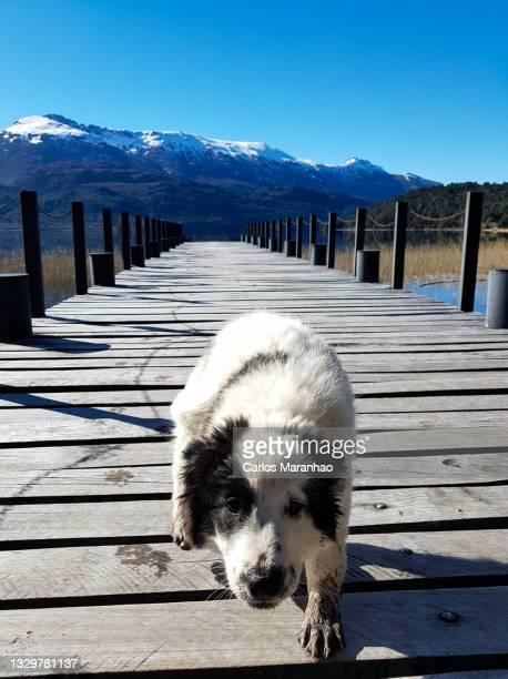 um cachorro amistoso - um animal stock pictures, royalty-free photos & images
