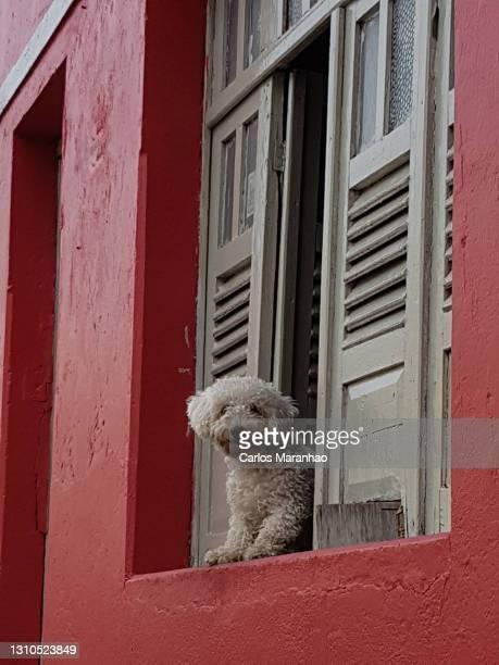um cachorro na janela - um animal stock pictures, royalty-free photos & images