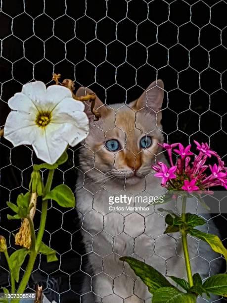 um gato na janela - um animal stockfoto's en -beelden