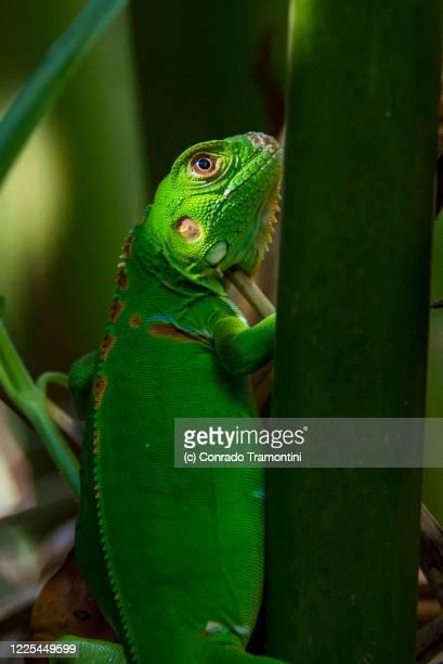 um largato entre a vegetação - um animal stockfoto's en -beelden