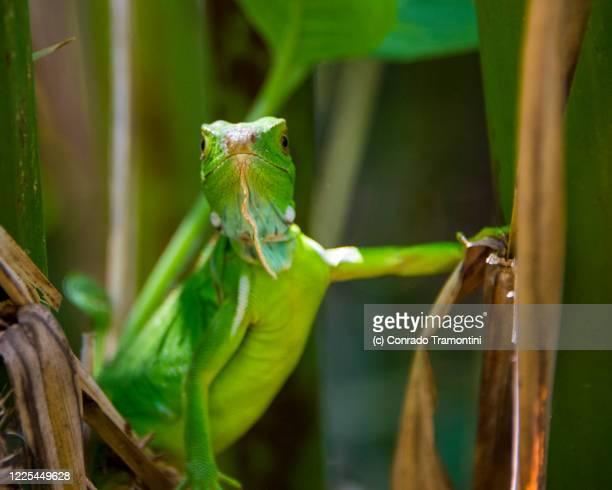 um largato entre a vegetação - um animal stock pictures, royalty-free photos & images
