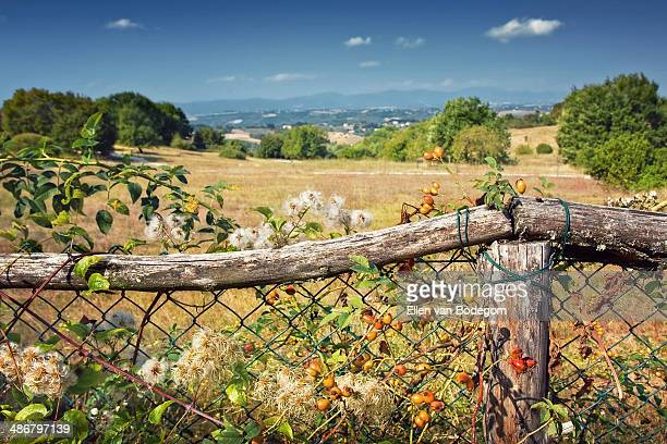 umbria landscape - perugia stock pictures, royalty-free photos & images