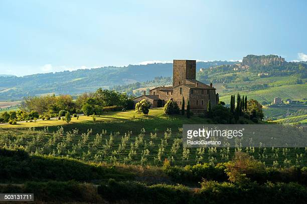 umbrian landscape - olive orchard stock photos and pictures