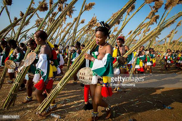 umhlanga procession of reeds - reed dance stock pictures, royalty-free photos & images