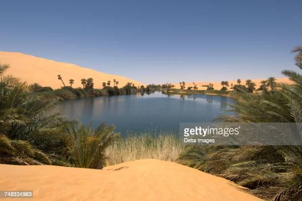 umm el ma lake, erg awbari, sahara desert, fezzan, libya - oasis fotografías e imágenes de stock