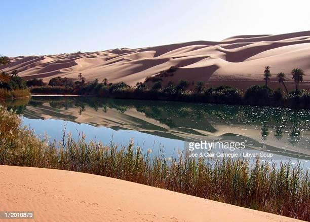 umm-al-maa, oasis, libyan sahara - date palm tree stock pictures, royalty-free photos & images