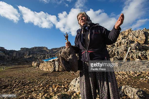 Ummu hanim wife of Yoruk shepherd Refik Ogan holds a chicken taken to be brought with them during the seasonal migration to the lower grazes on...