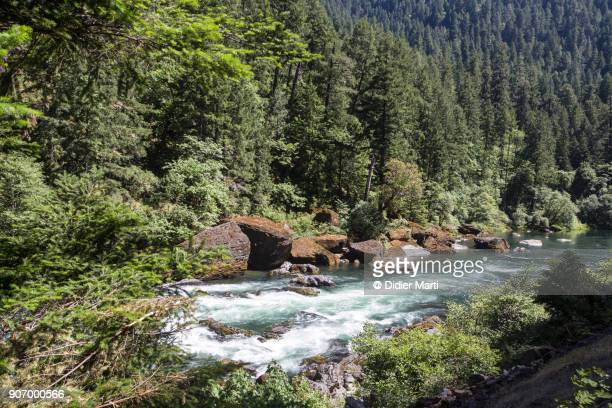 umpqua river in the pacific northwest in the state of oregon - didier marti stock photos and pictures
