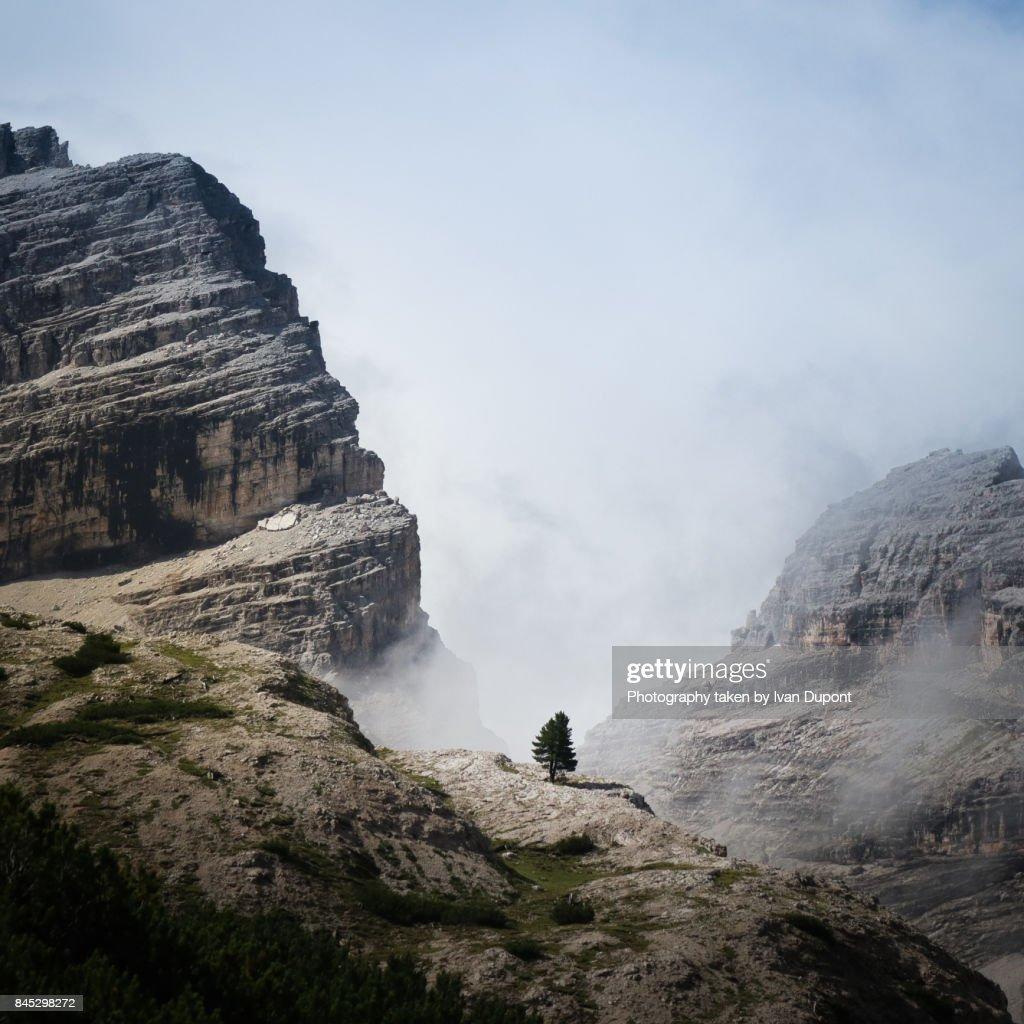 Un arbre solitaire dans les Dolomites : Stock Photo