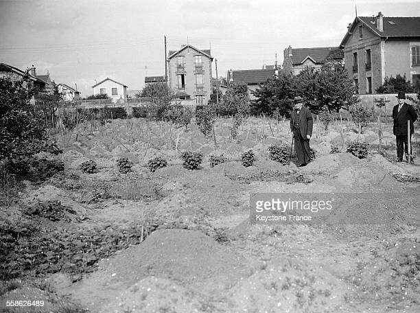 Un champ d'asperges le 22 mai 1932 à Argenteuil France