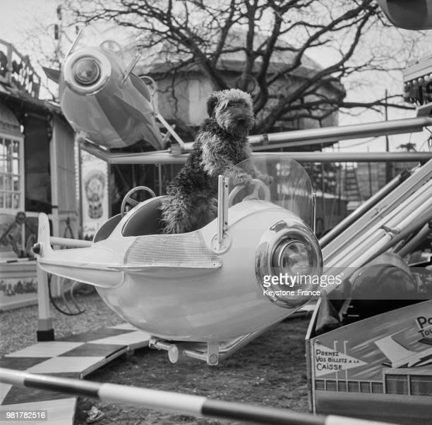 Un chien dans un manège à la Foire du Trône sur la pelouse de Reuilly à Paris en France le 17 mars 1967