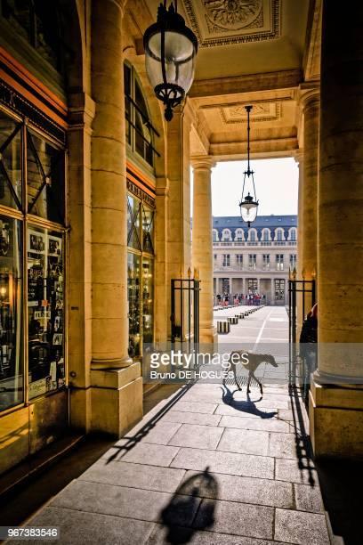 Un chien Lévrier dans les arcades du Palais Royal à Paris France