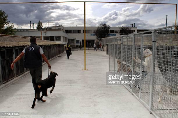 Un employé de la SPA sort un chien de sa niche le 13 août 2007 à Gennevilliers La SPA rappelle que 'comme chaque année' elle est confrontée à 'un...