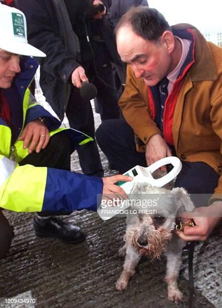 Un employé d'Eurotunnel contrôle la puce implantée sous la peau d'un chien nommé Snaffles avant son départ pour la Grande-Bretagne, le 28 février...