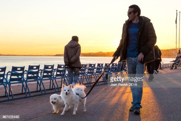 Un homme avec ses chiens se balladant sur la Promenade des Anglais 28 décembre 2016 à Nice