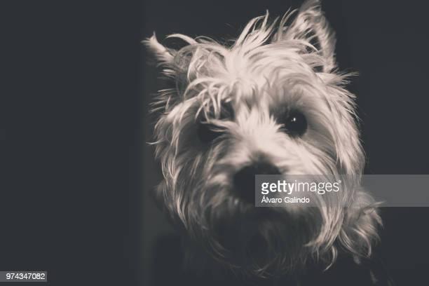 Un retrato de perro