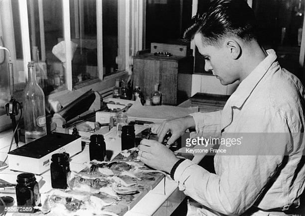 Un scientifique du laboratoire militaire pratique une autopsie des rats atomisés par la bombe atomique française de Reggane le 12 janvier 1961 à...