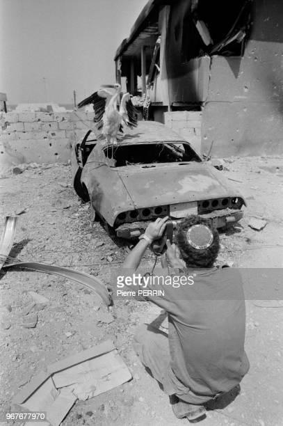 Un soldat israélien photographie une cigogne posée sur une voiture détruite à Beyrouth lors du conflit israélopalestinien le 13 aout 1982 Liban