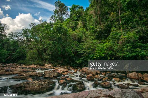 unaffected river in the jungle. - taman negara national park stock photos and pictures