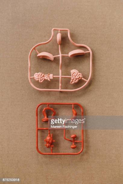 Unassembled models of important organs of the human body freshly out of the mold