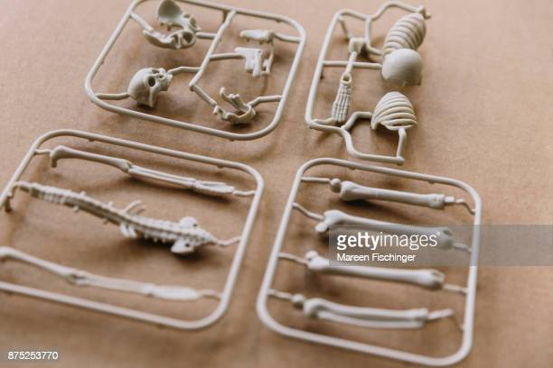 Unassembled models of skull and bones of the human body freshly out of the mold