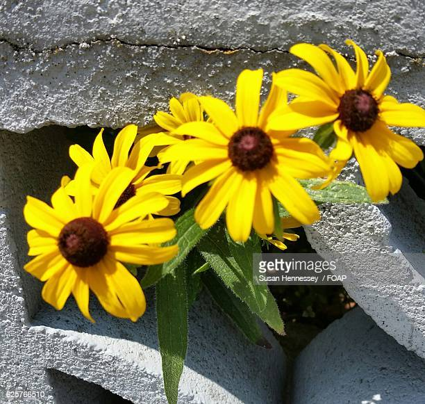 uncultivated yellow flowers - cranston rhode island stock photos and pictures