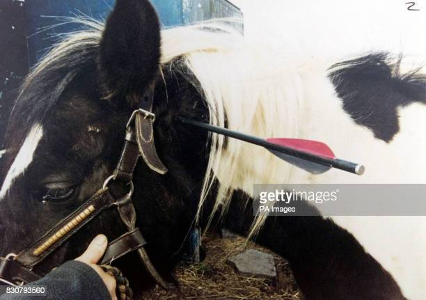Undated collect of Frisco a threeyearold mare who was shot in the neck and rib cage by Mark Telford Plumber Telford was jailed for two years for...