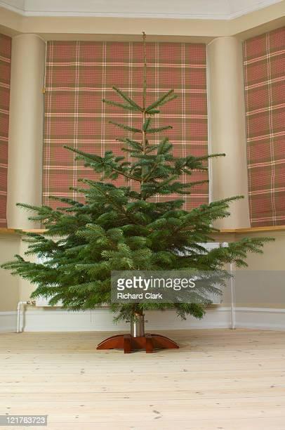 Undecorated christmas tree