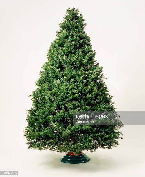 undecorated christmas tree - christmas tree stock pictures, royalty-free photos & images