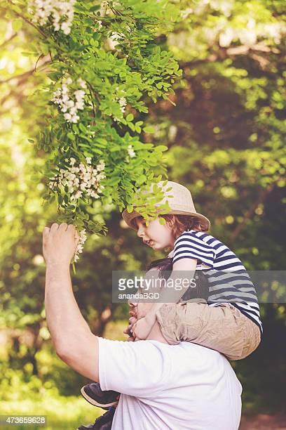 under acacia tree