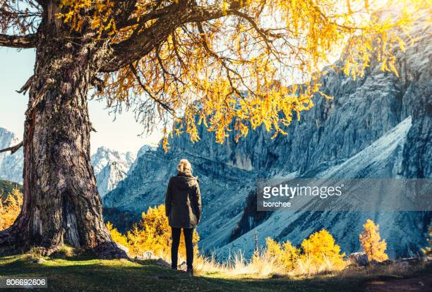 under an old yellow larch tree - larch tree stock pictures, royalty-free photos & images