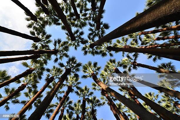 under palm trees in clutural park,i izmir - emreturanphoto bildbanksfoton och bilder