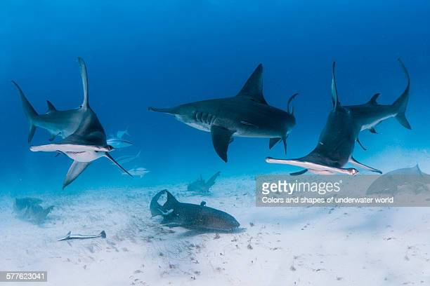 under surface - south bimini stock photos and pictures