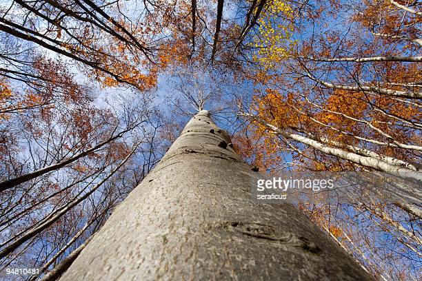 under the beech tree - durability stock photos and pictures