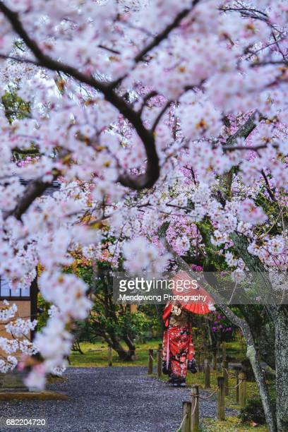 Under the cherry blossom tree
