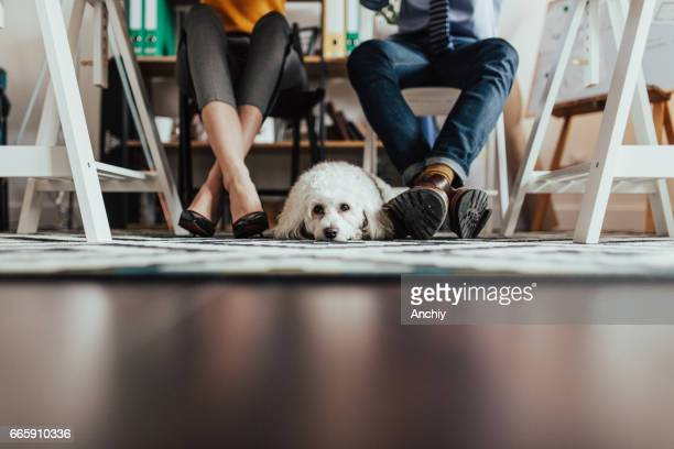 Under the desk shot of a dog lying on the floor