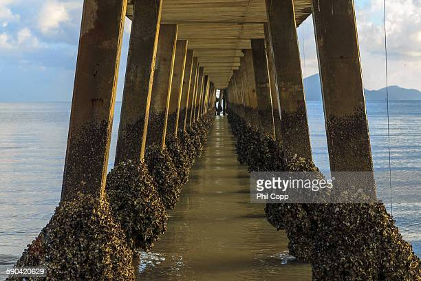 under the jetty - barnacle stock pictures, royalty-free photos & images