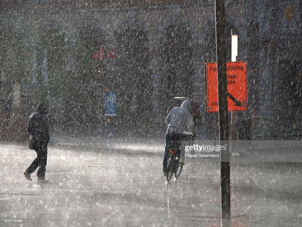 Under the rain : Stock Photo