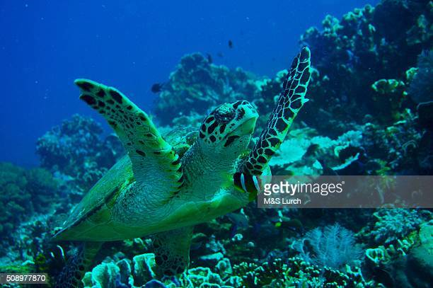 under the sea Indonesia