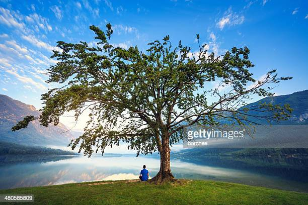 under the tree - zen like stock pictures, royalty-free photos & images
