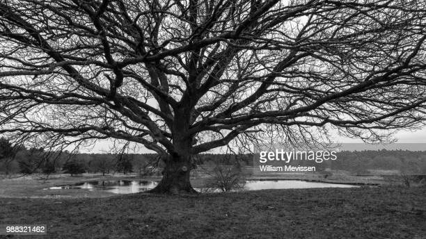 under the tree - william mevissen stock pictures, royalty-free photos & images