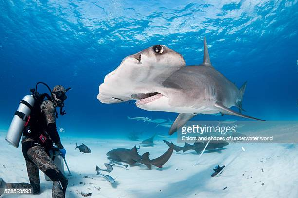 under water - south bimini stock photos and pictures