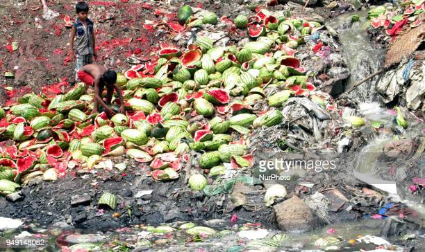 Underprivileged children collect the dumped watermelons at Sadarghat area in Dhaka Bangladesh on 20 April as they could not afford to buy those...