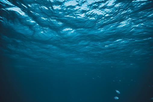 underwater background 922486848