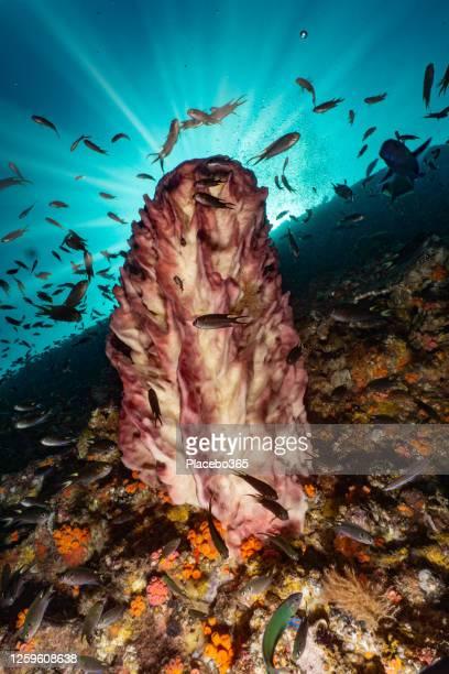 太陽の光と熱帯魚の学校と水中バレルスポンジサンゴ - スクーバダイビングの視点 ストックフォトと画像