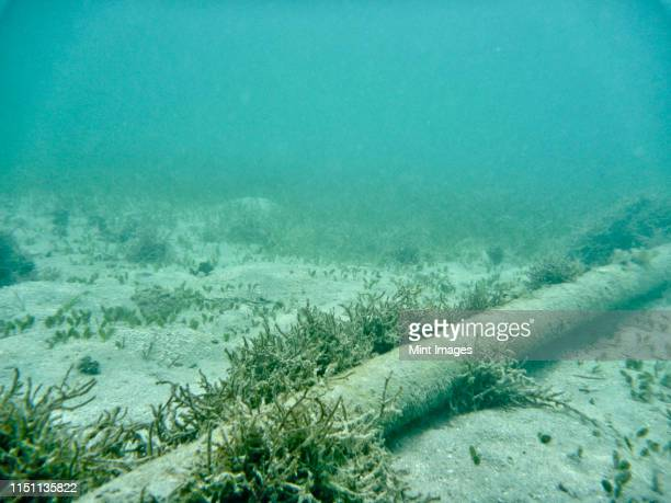 underwater cable on sea floor - undersea stock pictures, royalty-free photos & images